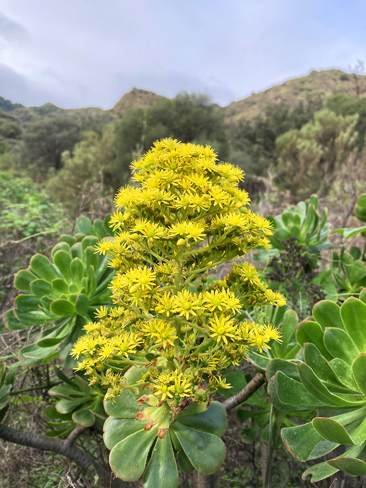 hiking tours on gran canaria with small groups