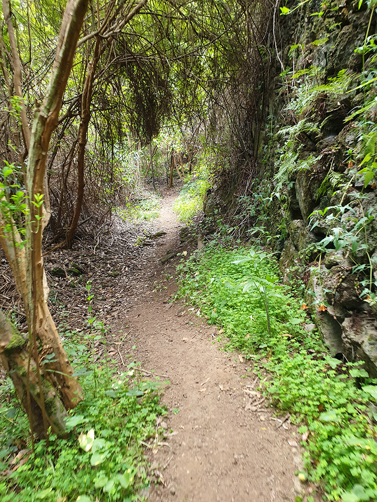 hiking on gran canaria to the laurel forest to the northern part of the island