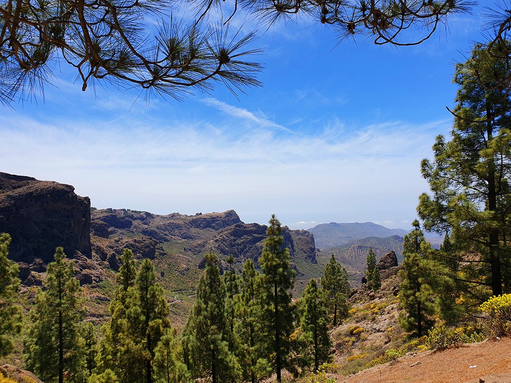 hiking on gran canaria to the roque nublo and almond flowers