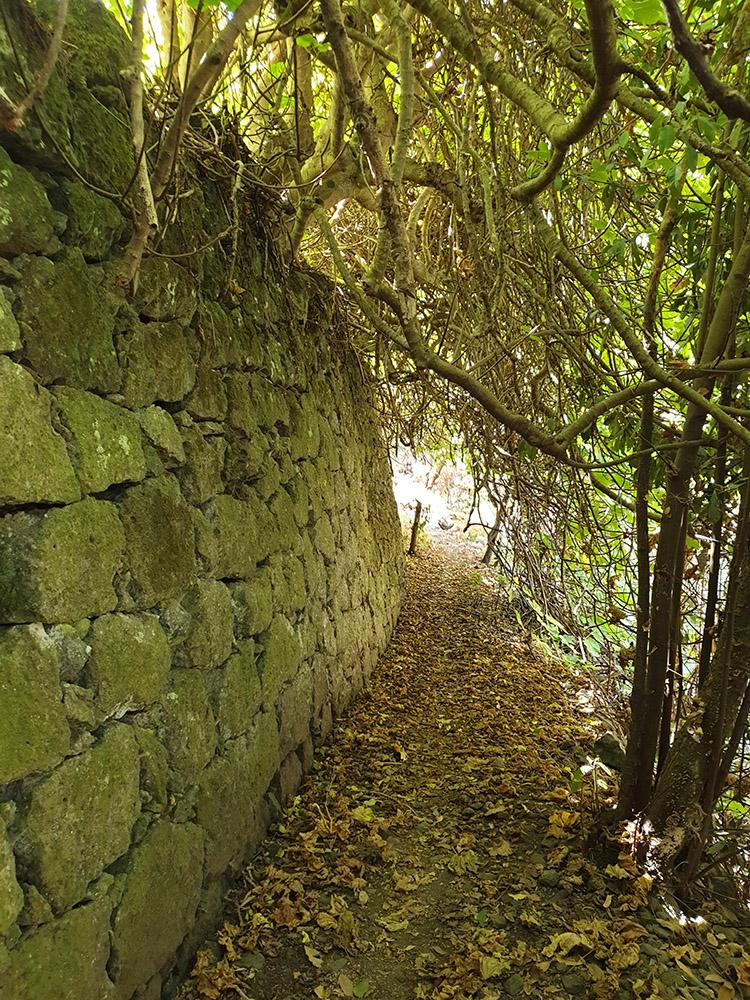senderismo en gran canaria por el bosque de la laurisilva