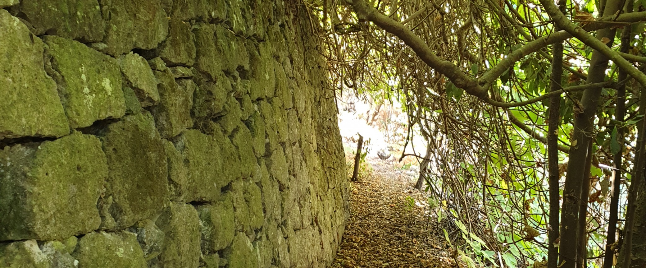 Wandern auf gran canaria Lorbeerwald