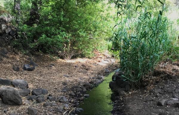 Geführte Wanderung durch die Falkenschlucht in Gran Canaria entlang eines flusses